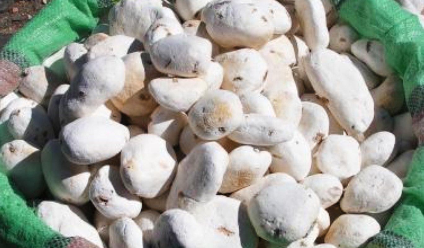 Beneficios de la harina de tocosh